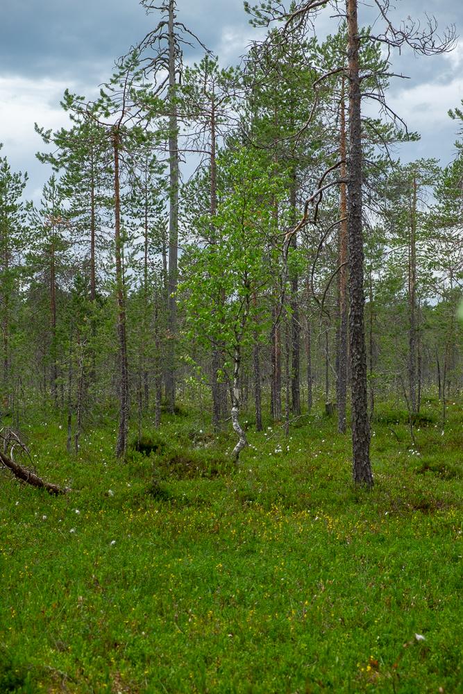 Finnland-3140