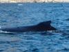 Ilulissat-1030502.jpg