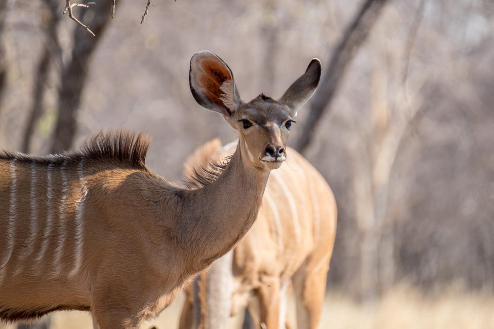 Namibia-31
