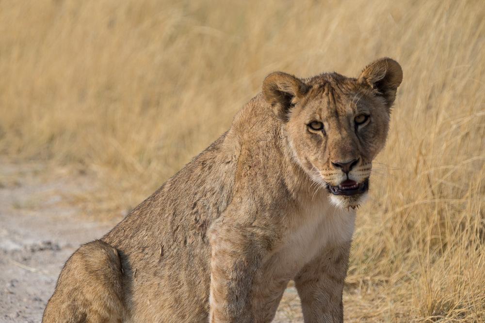 Namibia-43