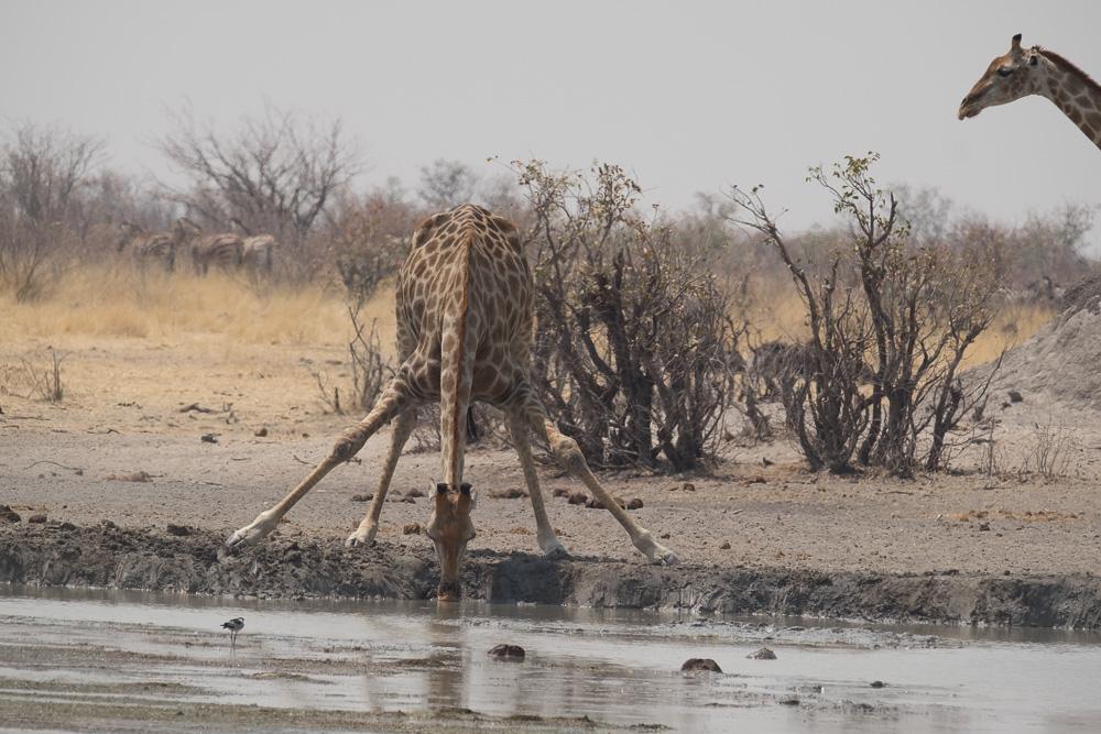 Namibia-48