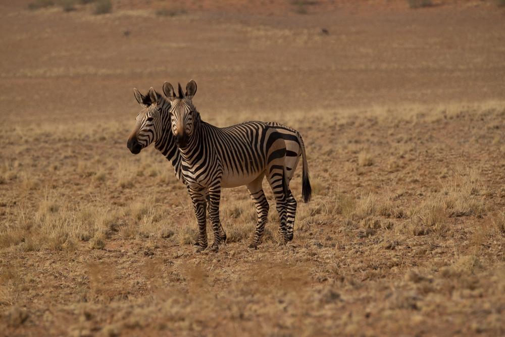 Namibia-70