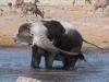 Namibia-35